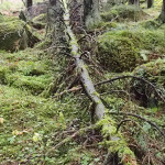 If a Tree Falls on the Internet … An Insurer Has a Duty to Defend