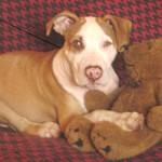 """After Pit Bull Case, Questions Dog New York's """"Unfortunate Event"""" Test"""