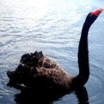 Black Swan Event? Florida Appellate Court Rejects Jury's Bad Faith Verdict
